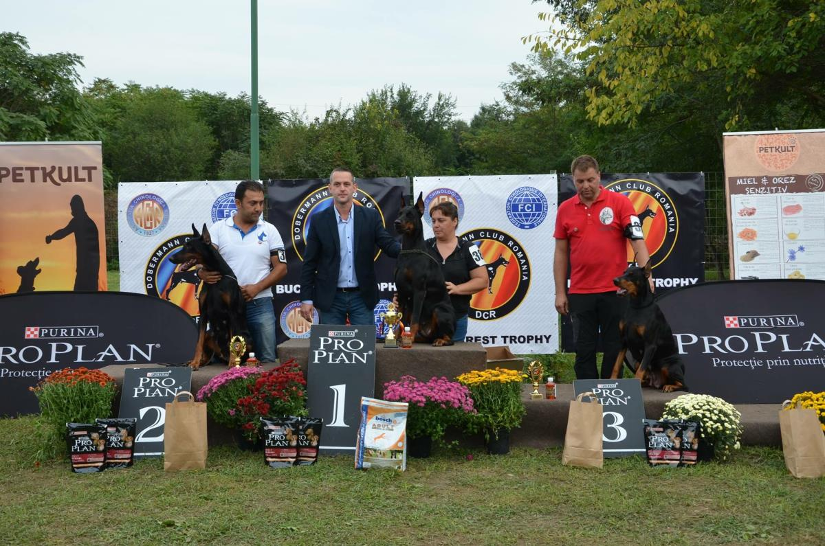 Knights of Night Doberman  ROMANYA DOBERMAN KLUP SHOW 2.